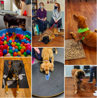 Diamonds in the Ruff – Training for Dogs & Their People